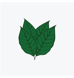 Leave tobacco template design vector