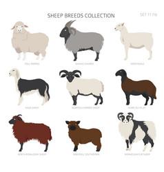 Sheep breeds collection 11 farm animals set flat vector