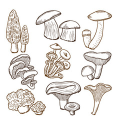 forest mushrooms in hand drawn style vector image