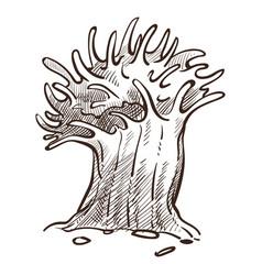 seaweed or sponge underwater plant or animal vector image