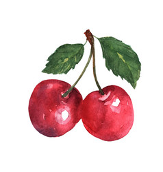 Two red cherries with leaves in watercolors on a vector