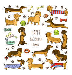 set of dog dachshund vector image