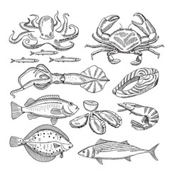 hand drawing of sea food for vector image