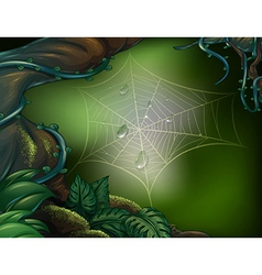 A spider web in a rainforest vector