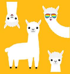 Alpaca llama animal set face in rainbow glassess vector