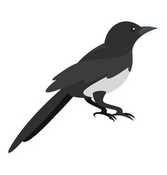 Domestic magpie icon flat style vector