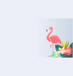 Flamingo bird design on white background vector