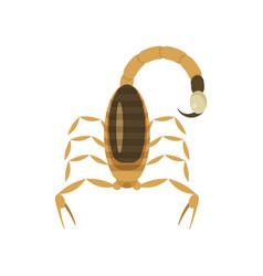 poisonous scorpion vector image