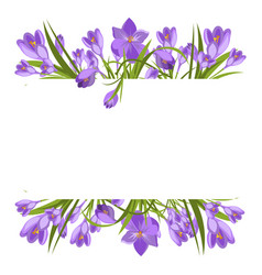 Purple crocuses in the snow vector