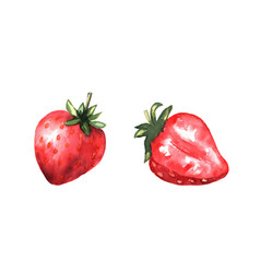 Red strawberries and a strawberry slice bright vector