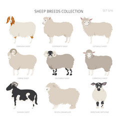 Sheep breeds collection 5 farm animals set flat vector