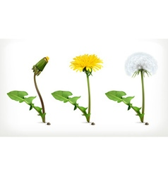 Dandelion flowers icon set vector image vector image