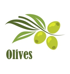 Green olives branch vector image