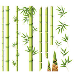 Bamboo stems and leaves vector