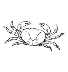 Land crab vintage vector