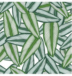 seamless pattern with tropical leaves calathea vector image