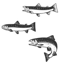 Set of trout silhouettes vector image vector image
