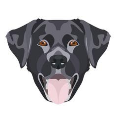 black labrador retriever with smiles vector image