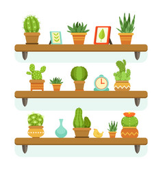 cactuses in pots stand on the shelves decorative vector image