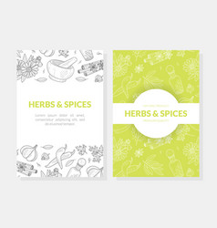 herbs and spices card templates set with natural vector image
