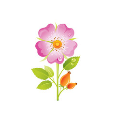 wild rose flower floral icon realistic rosa with vector image