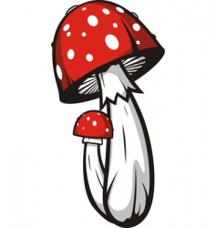 agaric mushrooms vector image vector image