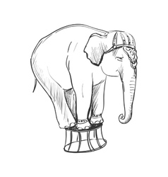 Doodle circus elephant vector