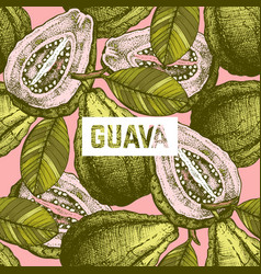guava fruit background vector image