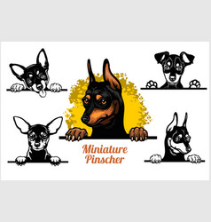 Miniature pinscher - peeking dogs set dog vector