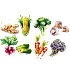 vegetables watercolor set collection vector image