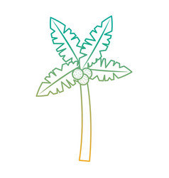 tropical palm tree coconut natural vector image