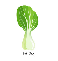bok choy or pak choi type of chinese cabbage vector image