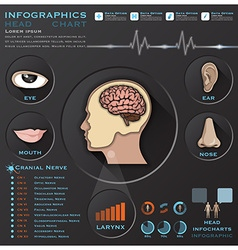 Head And Otolaryngology System Medical Infographic vector image