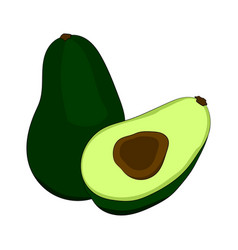 green avocado with ossicle in a cut vector image