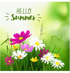 Summer wild flowers background vector