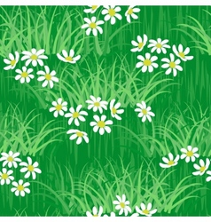 camomile field seamless background vector image