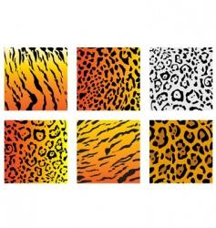 wildcat fur vector image