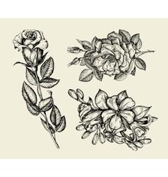 Flowers hand drawn sketch flower rose floral vector