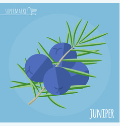 juniper flat design icon vector image
