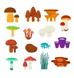 Mushrooms set vector image