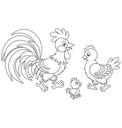 rooster hen and chick vector image