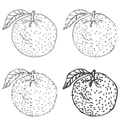 Set of four hand drawn orange fruits vector