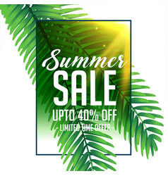 Summer sale banner with green tropical leaves vector