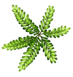A topview of a fern vector