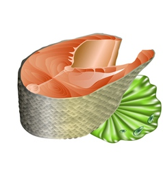Salmon on lettuce leaf vector