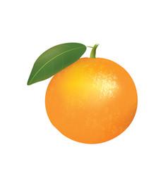 whole orange with leaf vector image
