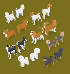 isometric small dog breeds with jack-russell vector image