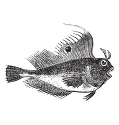 butterfly blenny fish engraving vector image vector image