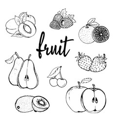 fruit hand drawn contour vector image vector image