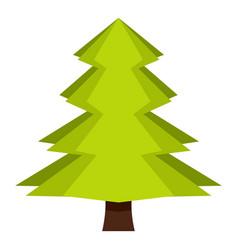 Canadian fir icon isolated vector